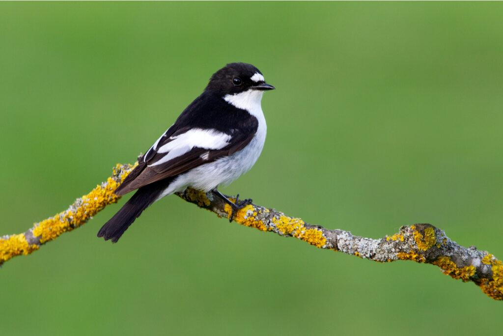 ¿Qué aves migran en otoño?