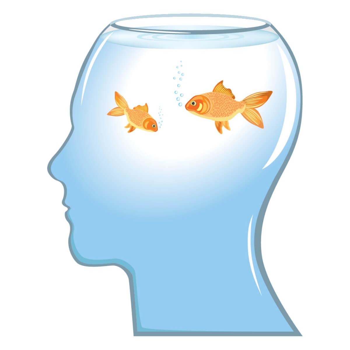 El mito de que los peces no tienen memoria es mentira.