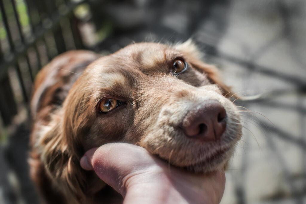 ¿Cuál es la raza de perro más longeva?