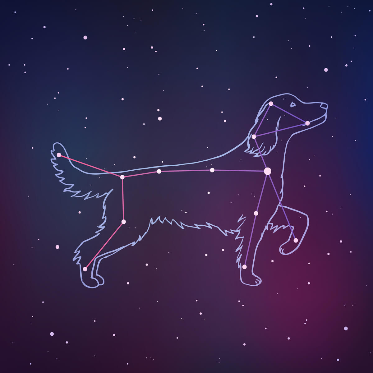 ¿Tienen los perros chakras?