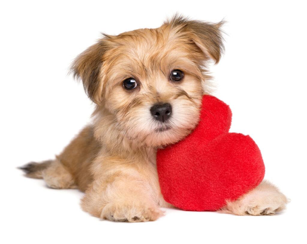 Colesterol alto en perros: causas, diagnóstico y tratamiento