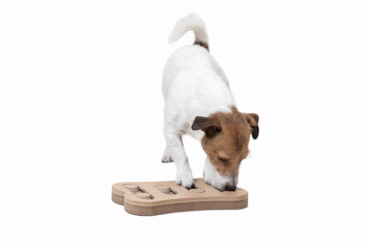Estimulación mental en perros: una cuestión de juego