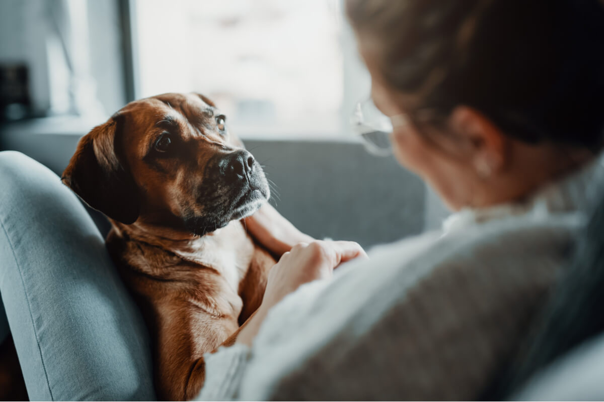 Tres tratamientos para la neumonía en mascotas