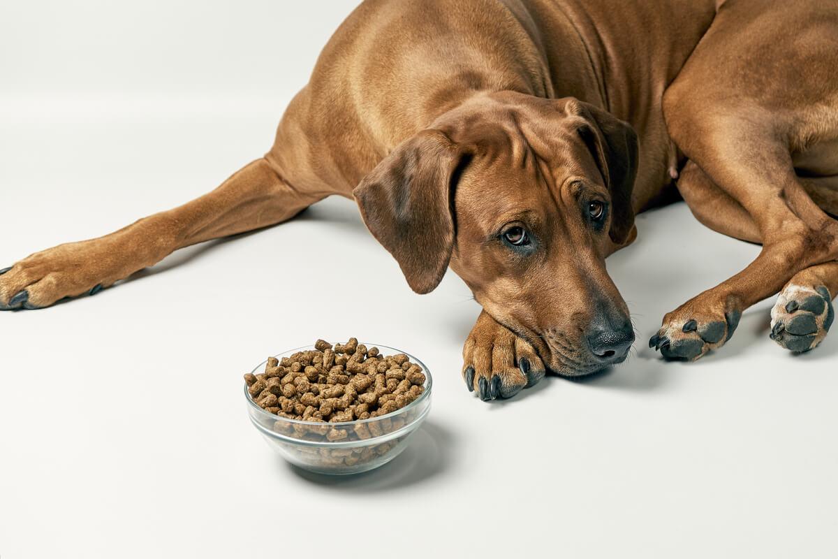 Un perro que no quiere comida.