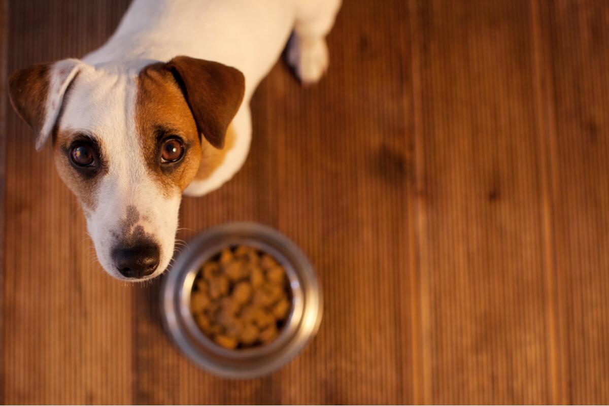 Alergia alimentaria en mascotas: ¿cómo saberlo?