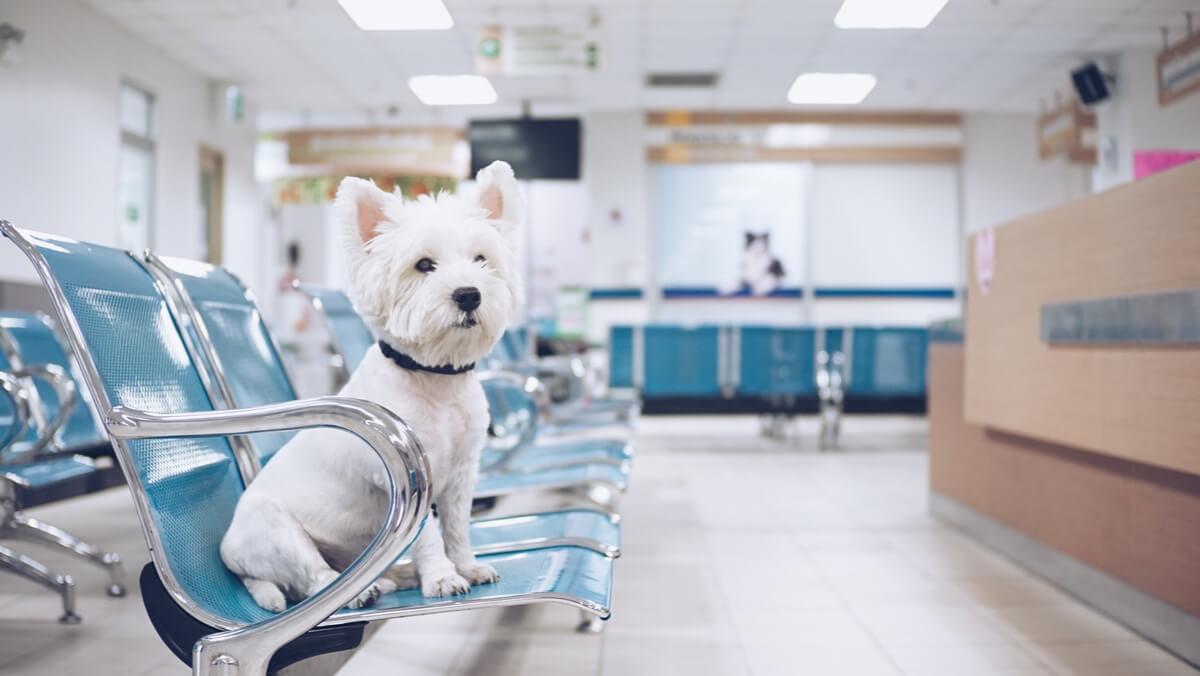Un perro en sala de urgencias.