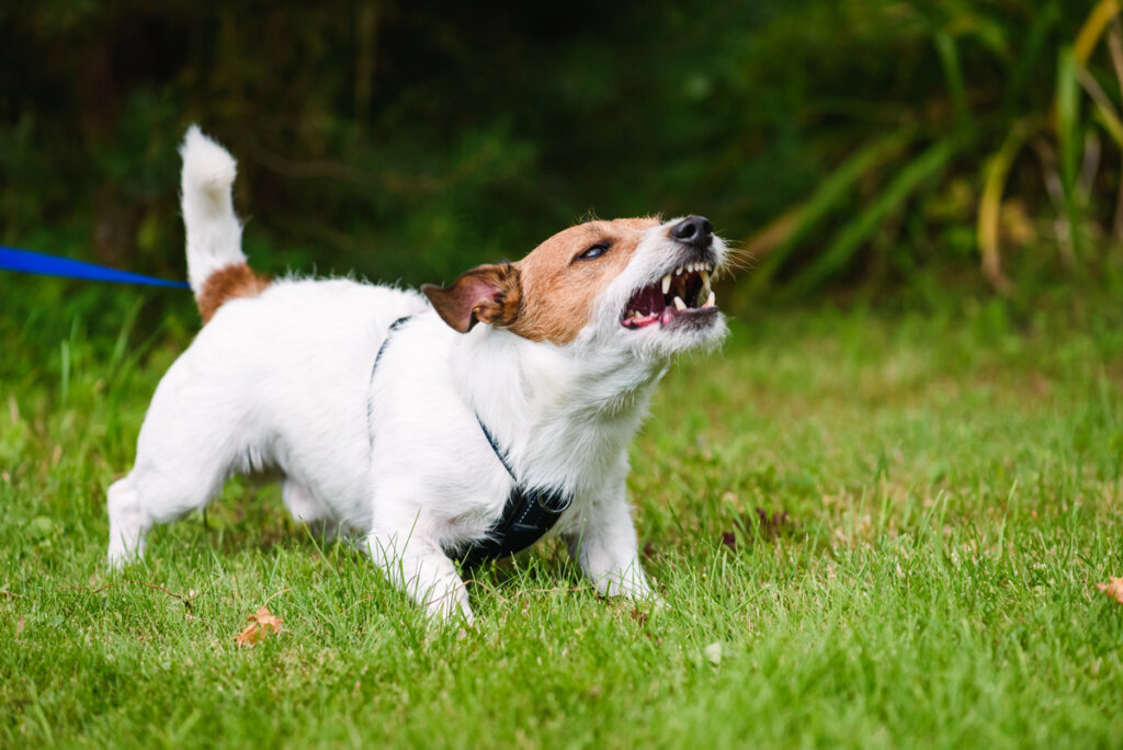 ¿Cómo controlar a un perro territorial?