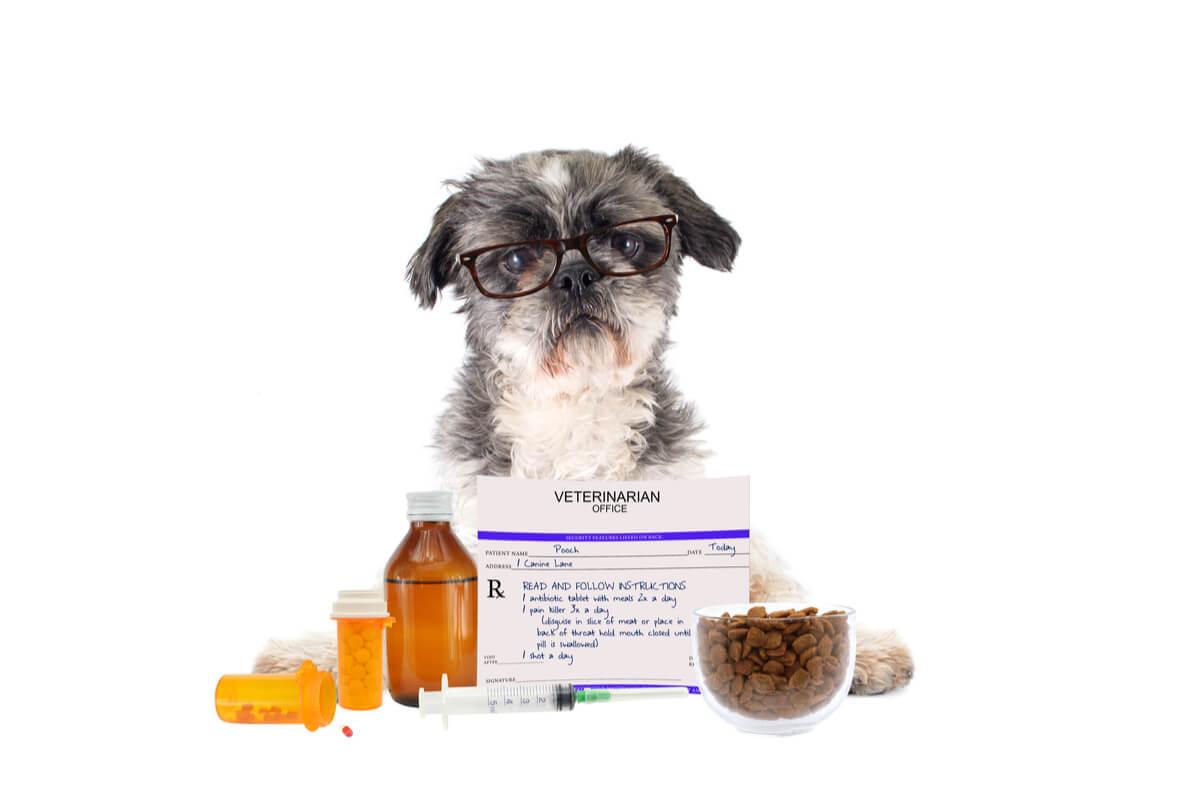 Un perro tomando fármacos.