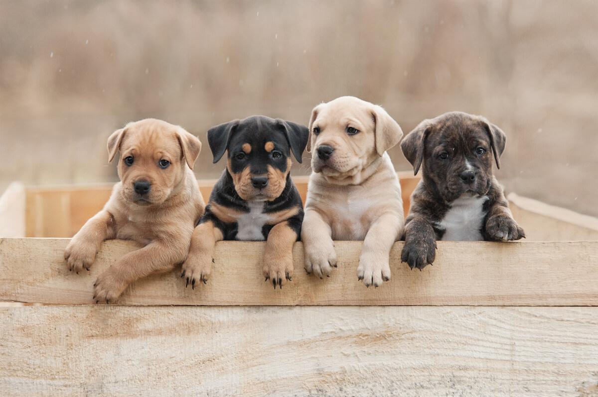 Unos cachorros de perros.