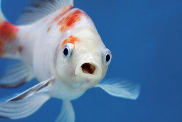 ¿Los peces no tienen memoria?