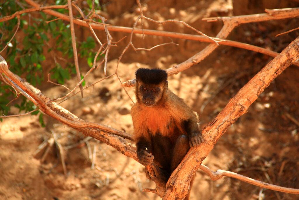 Un grupo de primates llega a la edad de piedra