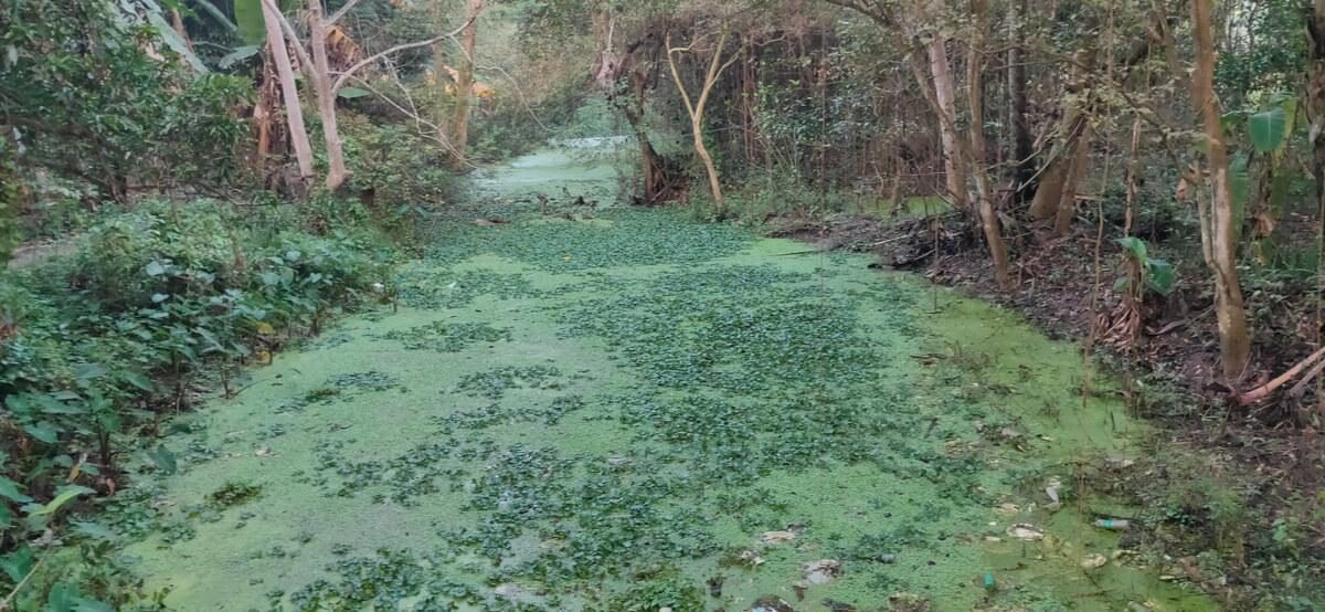 Un río eutrofizado.
