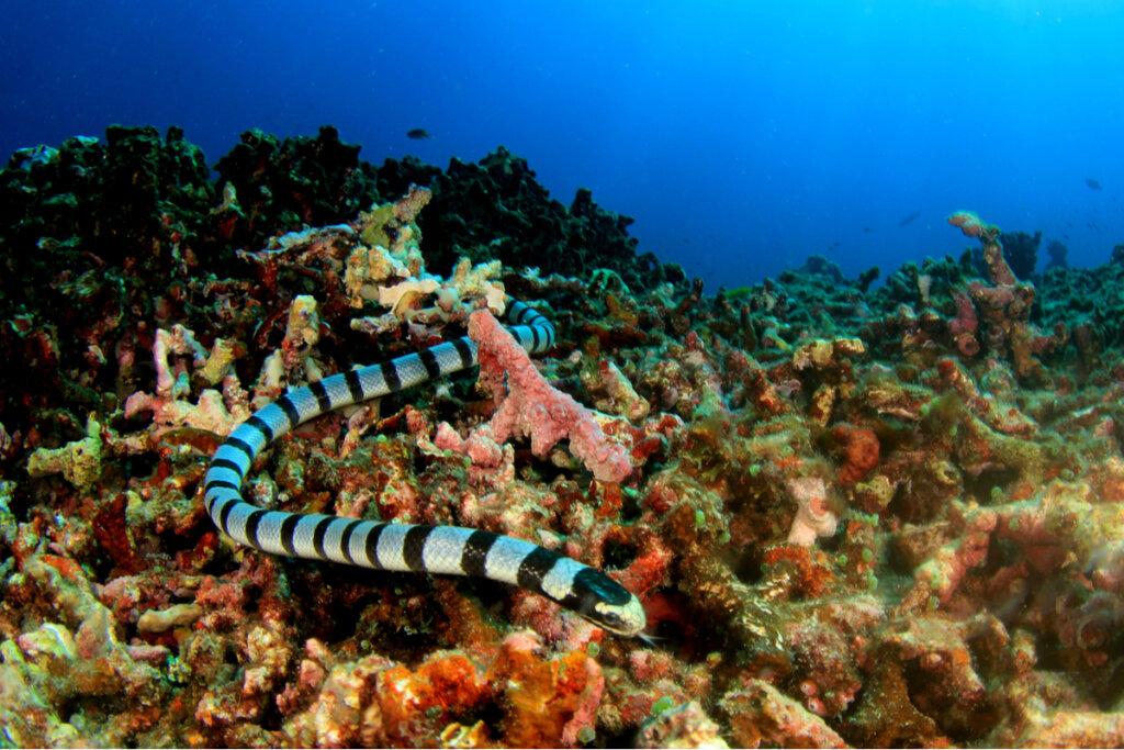 ¿Cómo se clasifican las serpientes marinas?