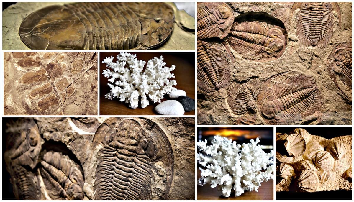 Tipos de fósiles.