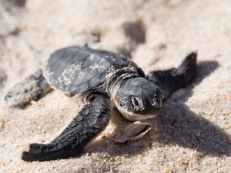 El efecto del comercio ilegal en las especies de animales