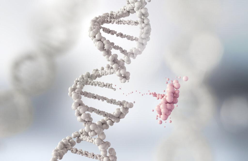 ¿Qué es el flujo génético entre poblaciones animales?