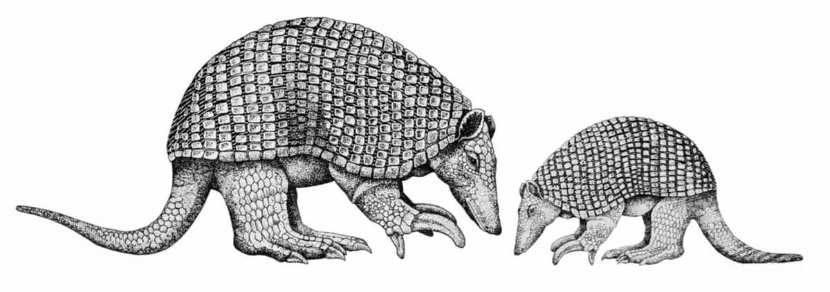 Un dibujo que representa a armadillos gigantes.