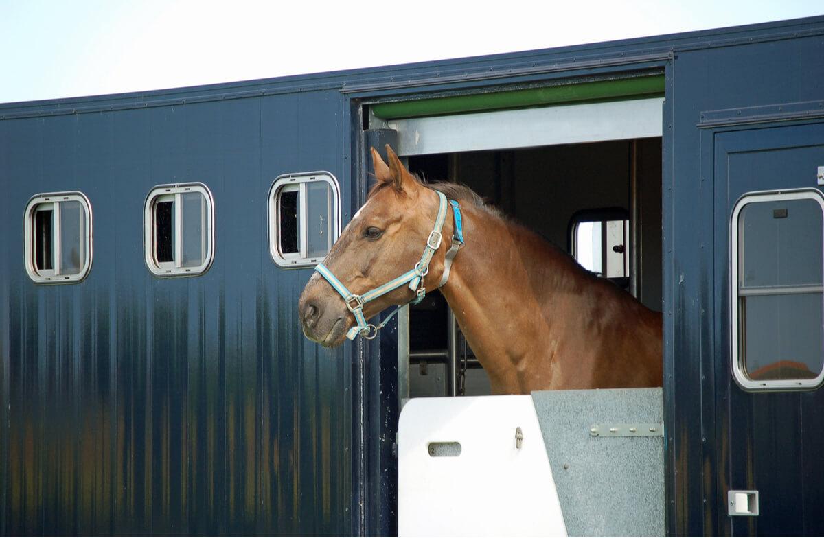 Un cheval qui voyage.
