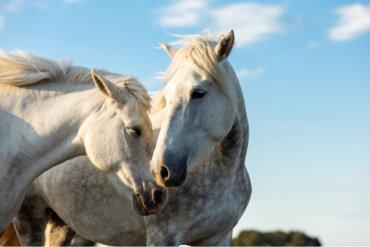 Dos enfermedades de los caballos sometidas a control oficial