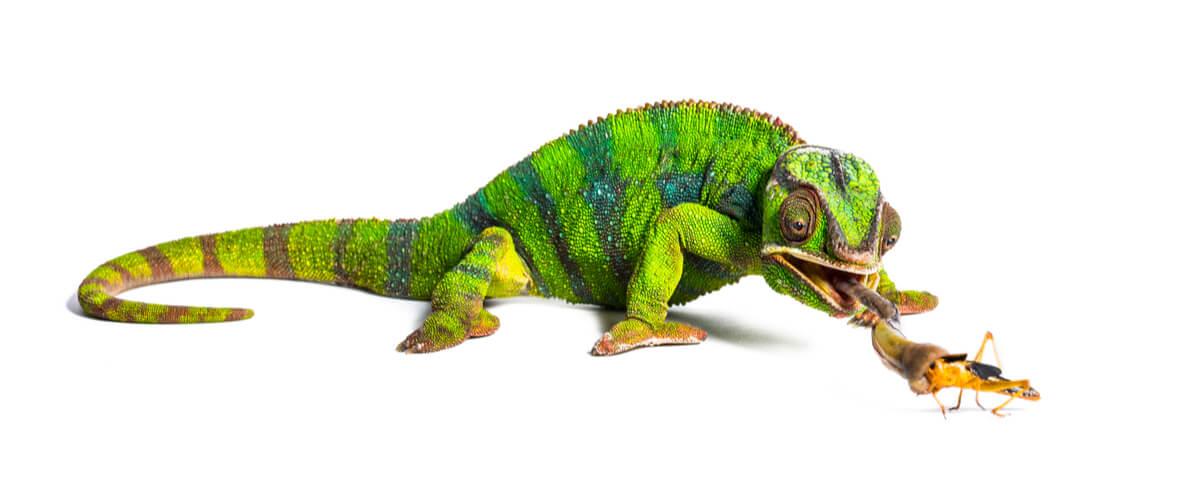 Uno de los animales de Madagascar.