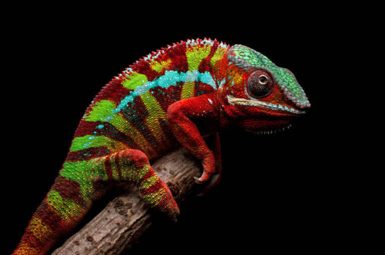 9 animales de Madagascar