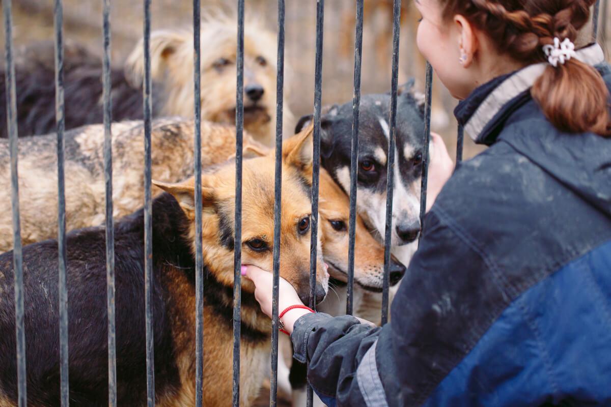 Centros de Recuperación y Rehabilitación de animales.