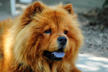 ¿Cuáles son las causas de la lengua azul en perros?