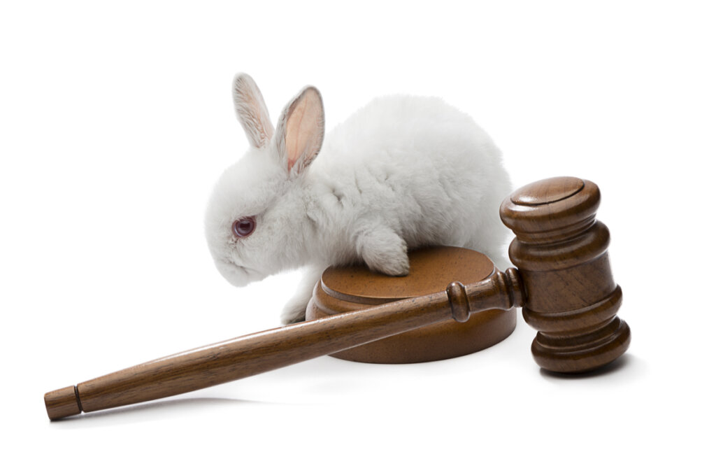 ¿Qué es un procurador de tribunales sobre animales?