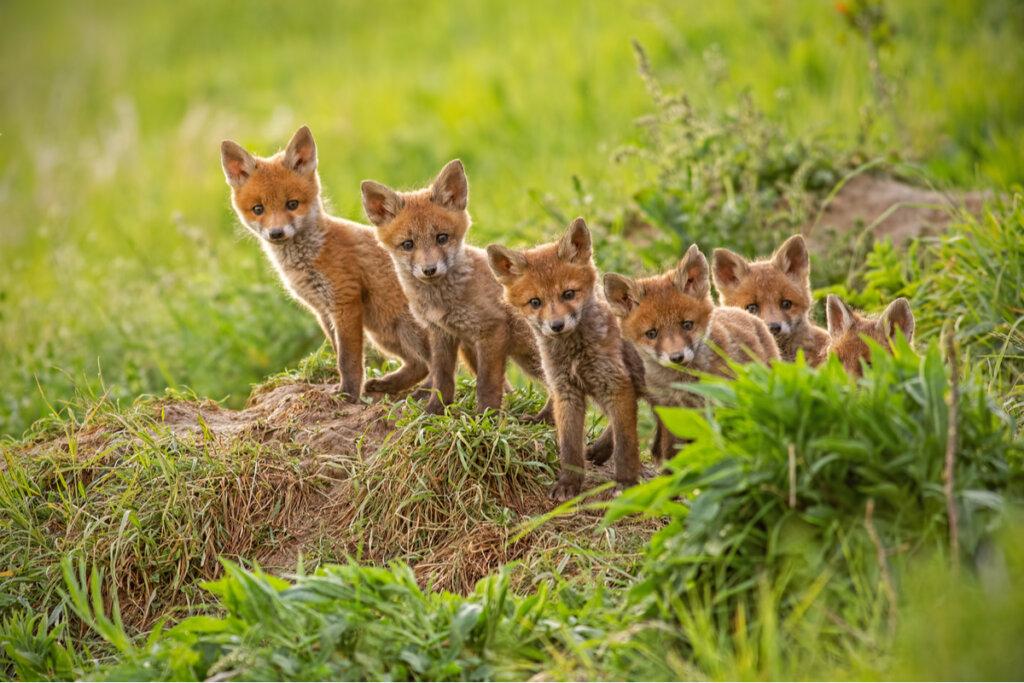 ¿Por qué algunas madres animales se comen a sus hijos?