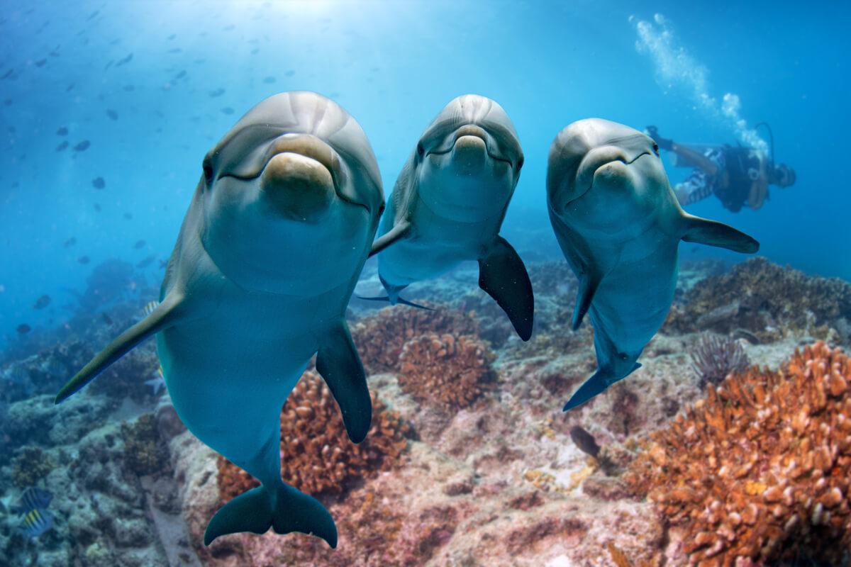 Los delfines sienten empatía.