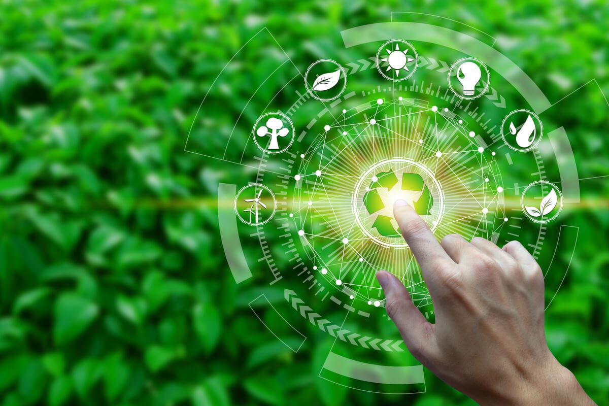 ¿Qué es la productividad en un ecosistema?