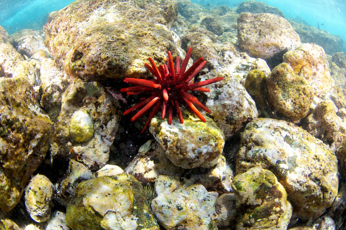 Los erizos de mar vienen en muchas formas y colores.