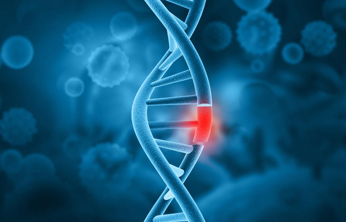 agresividad en perros y genética.