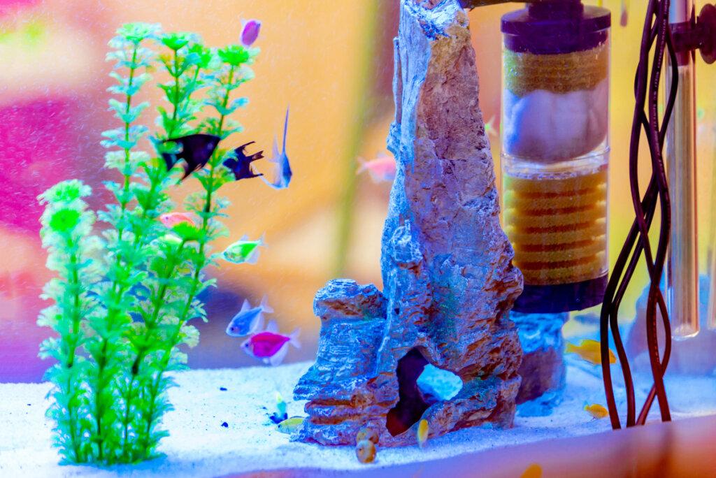 Cómo construir un filtro casero para tu acuario
