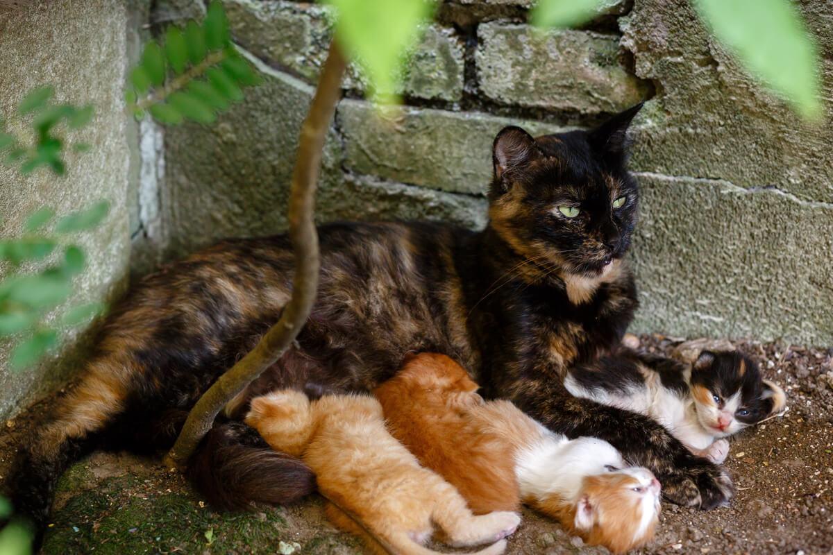 El nacimiento de camadas es un motivo por el cual perros y gatos acaban en refugios.
