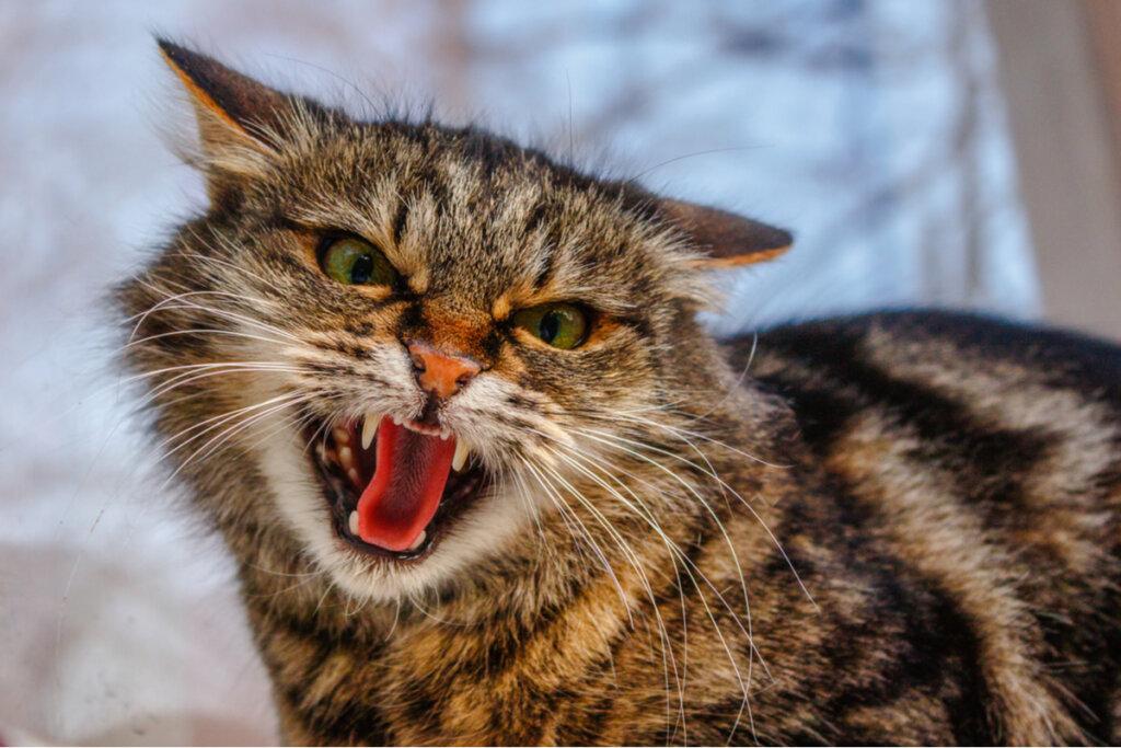 Los 4 trastornos de la conducta más comunes en gatos