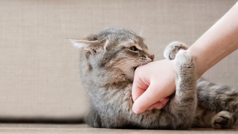 ¿Cómo ser un buen amigo para un gato?
