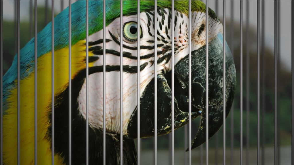 El síndrome de la miopatía por captura en los animales silvestres