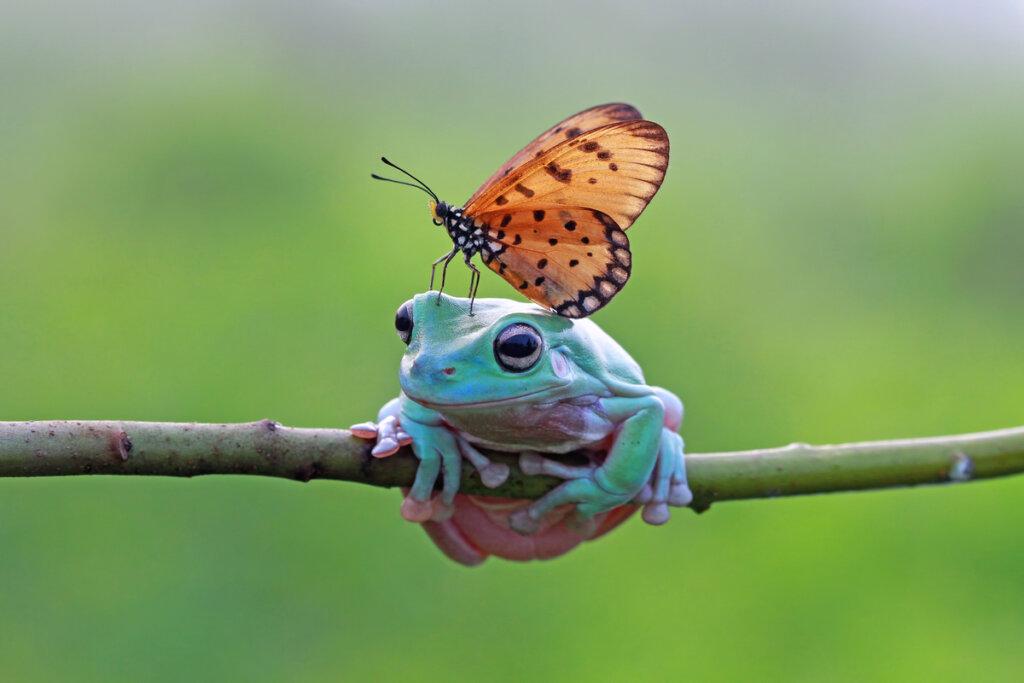 Rarezas y curiosidades de los anfibios anuros