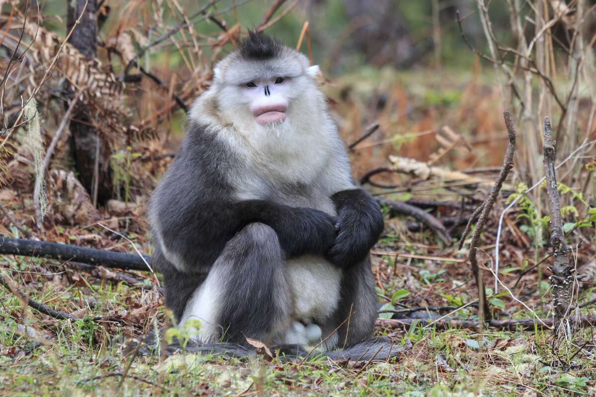 Un mono en el suelo.