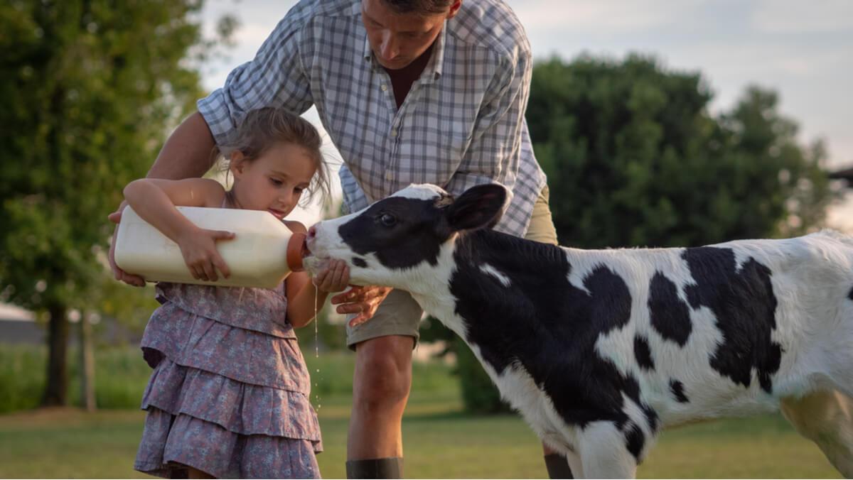 Inmunidad del ternero y leche materna.