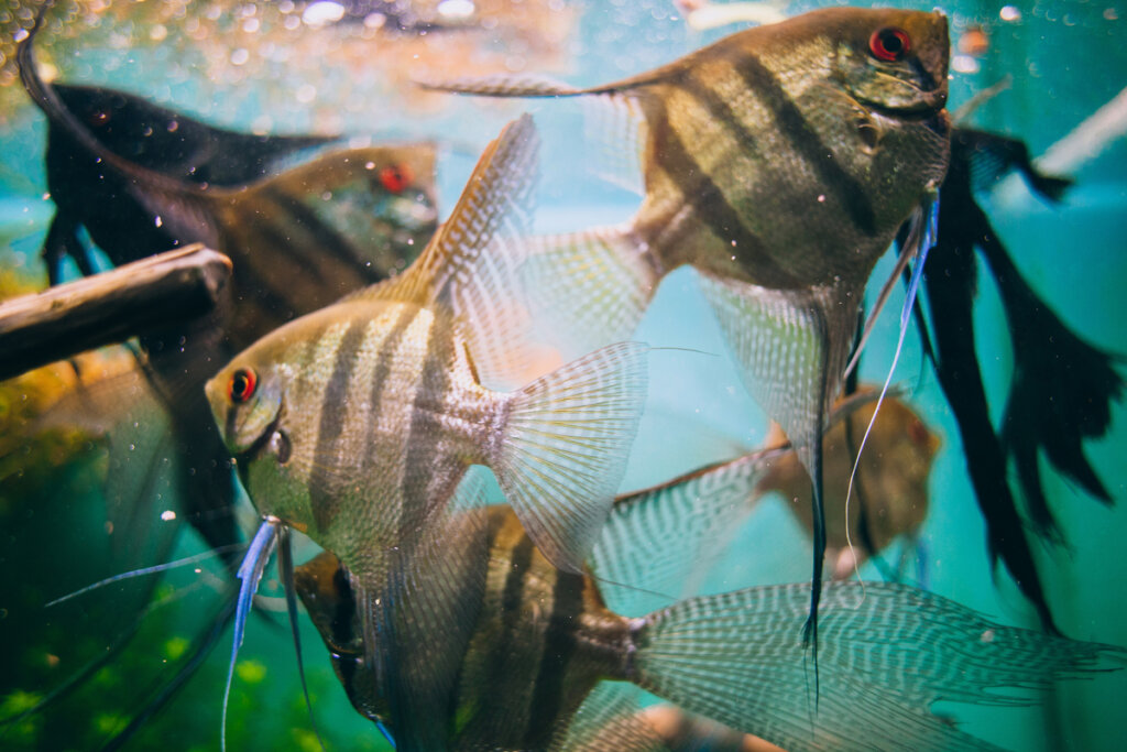 Alimento vivo para peces: ¿cómo cultivarlo en casa?