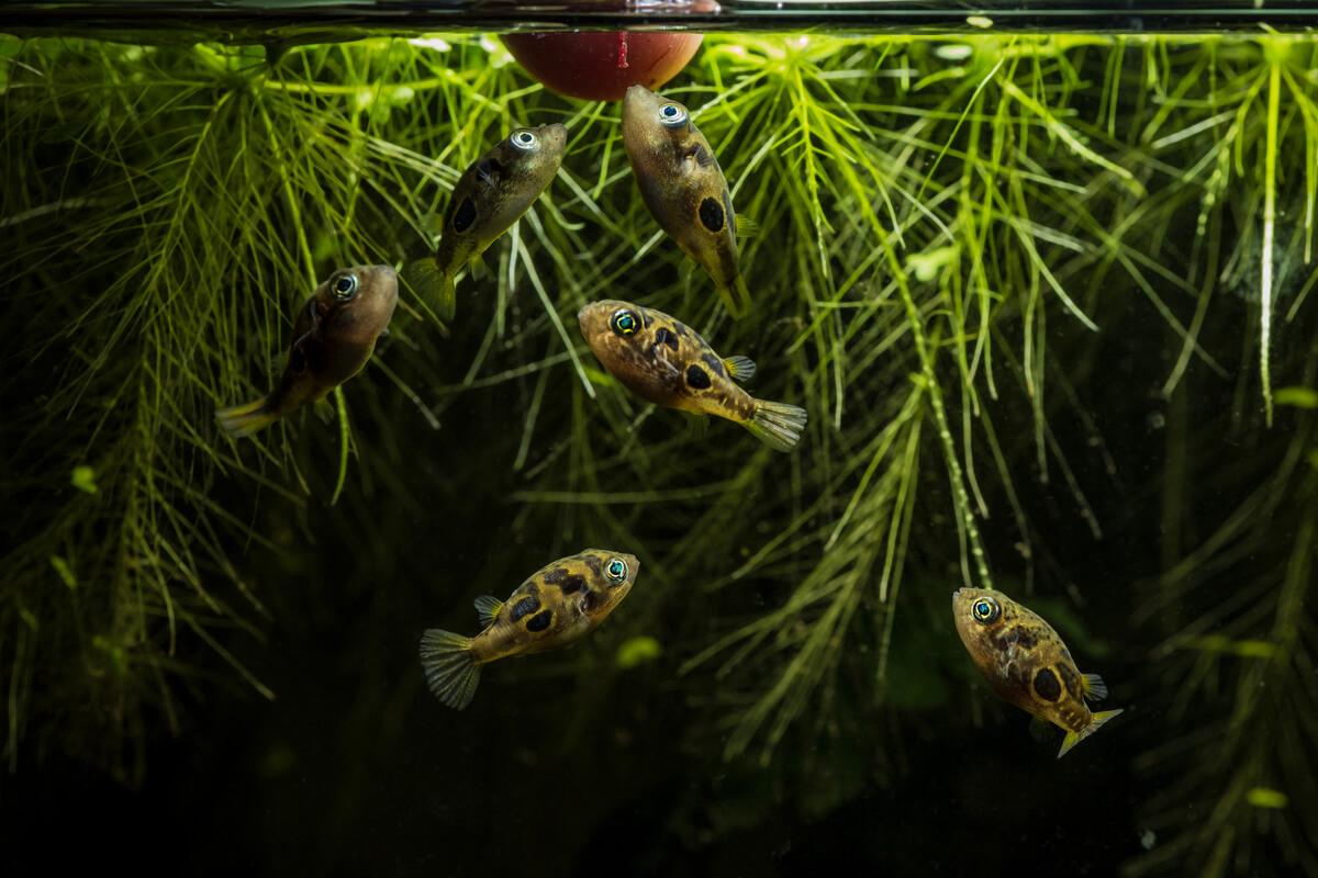 6 tipos de peces carnívoros para el acuario