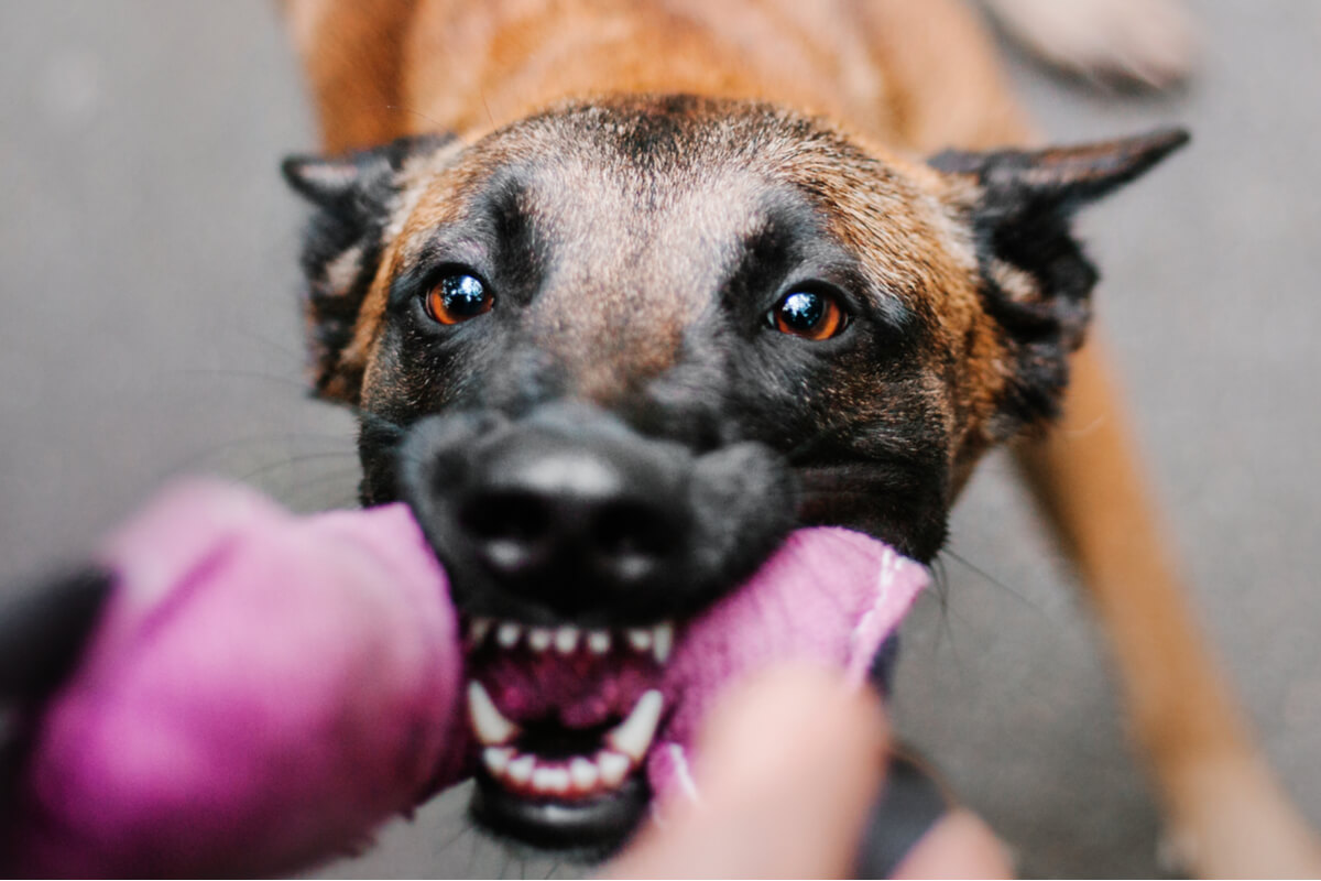 Il linguaggio del corpo nei cani è molto chiaro.