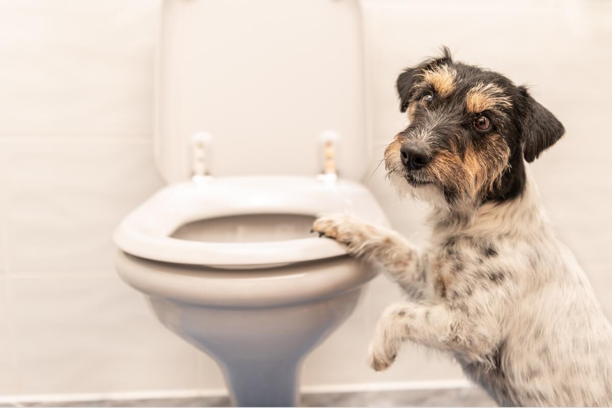 Alimentación en perros con diarrea: ¿cuál es la dieta correcta?