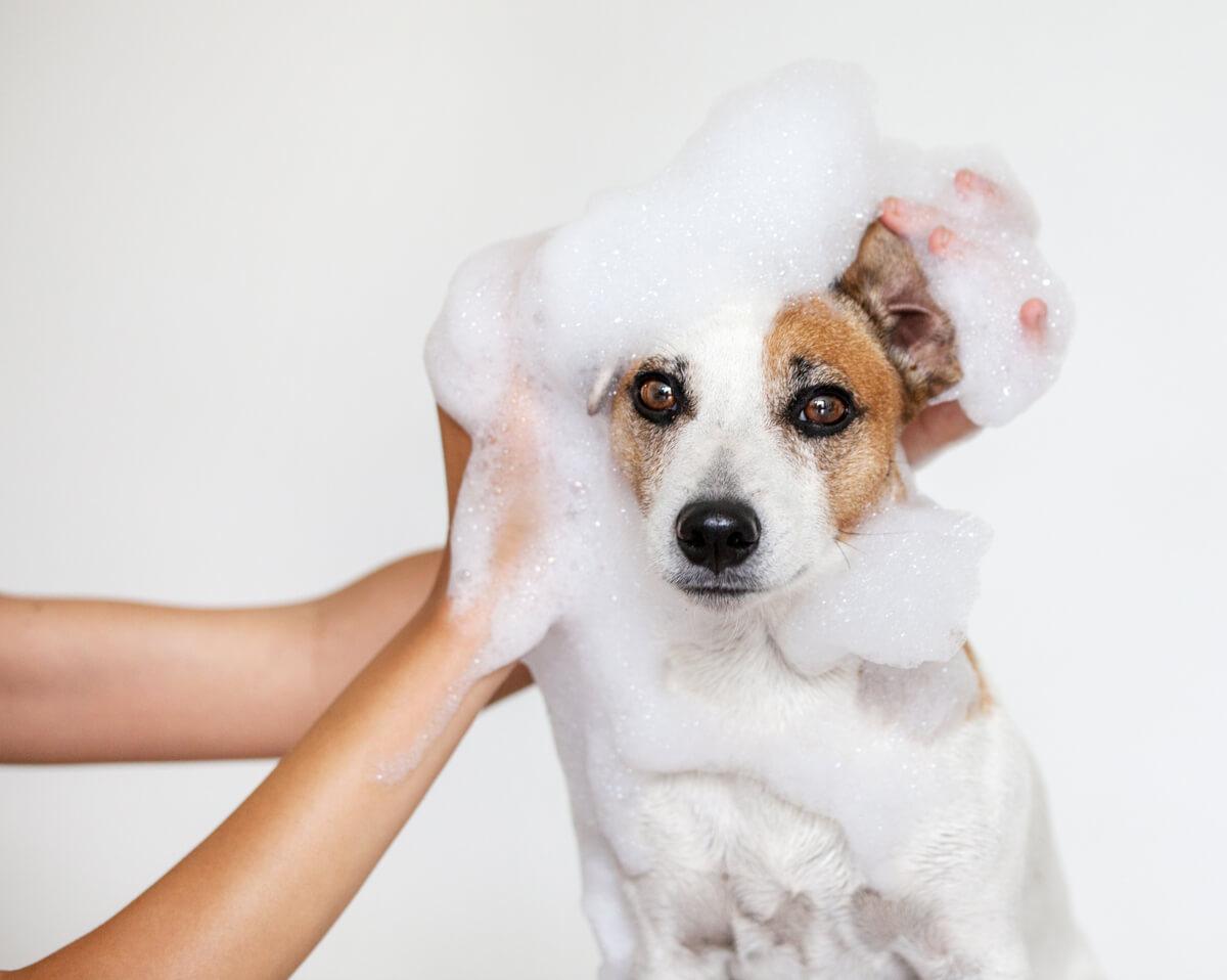 Un perro se lava en el baño.