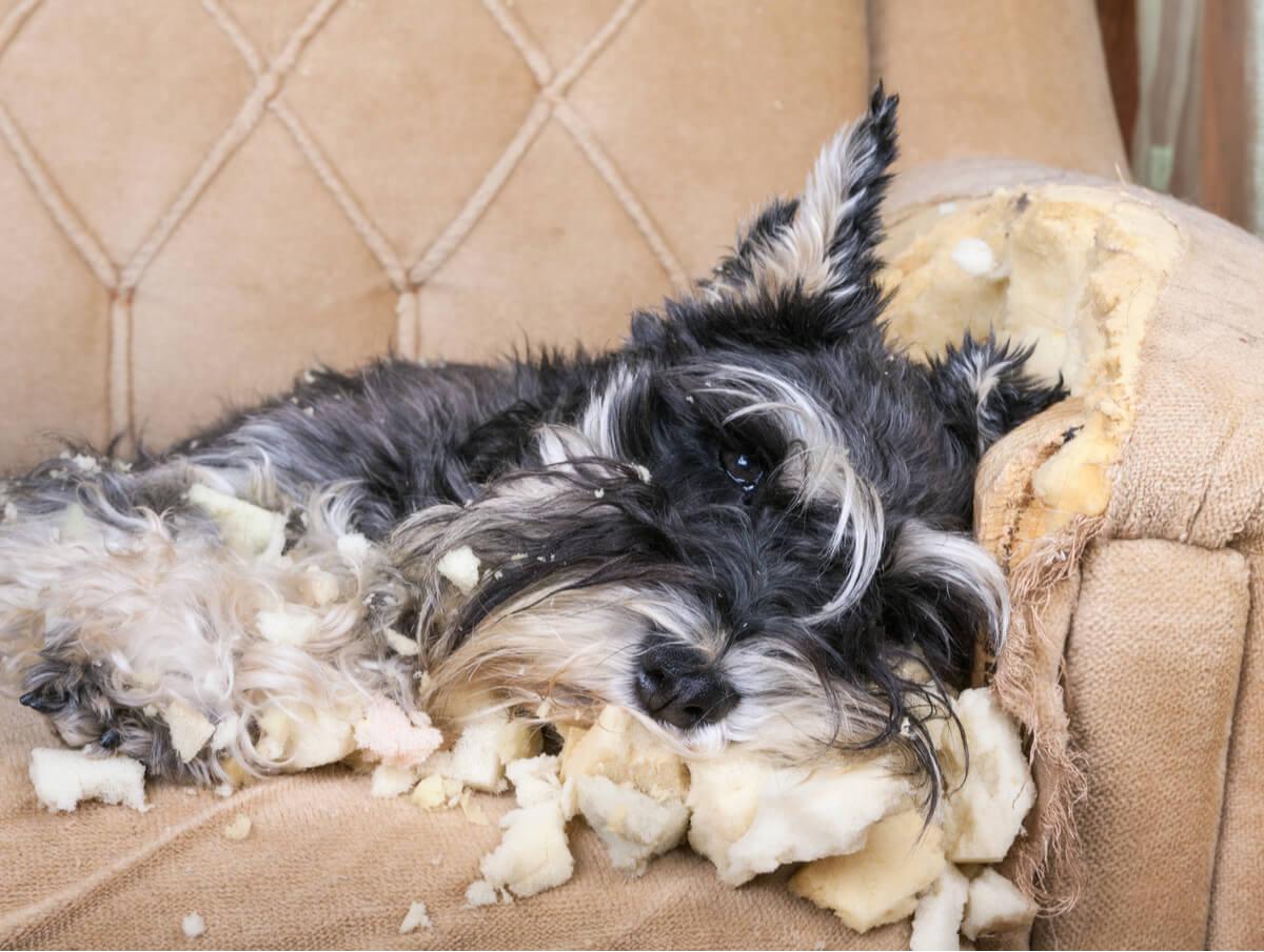 3 tratamientos para tratar la ansiedad en perros