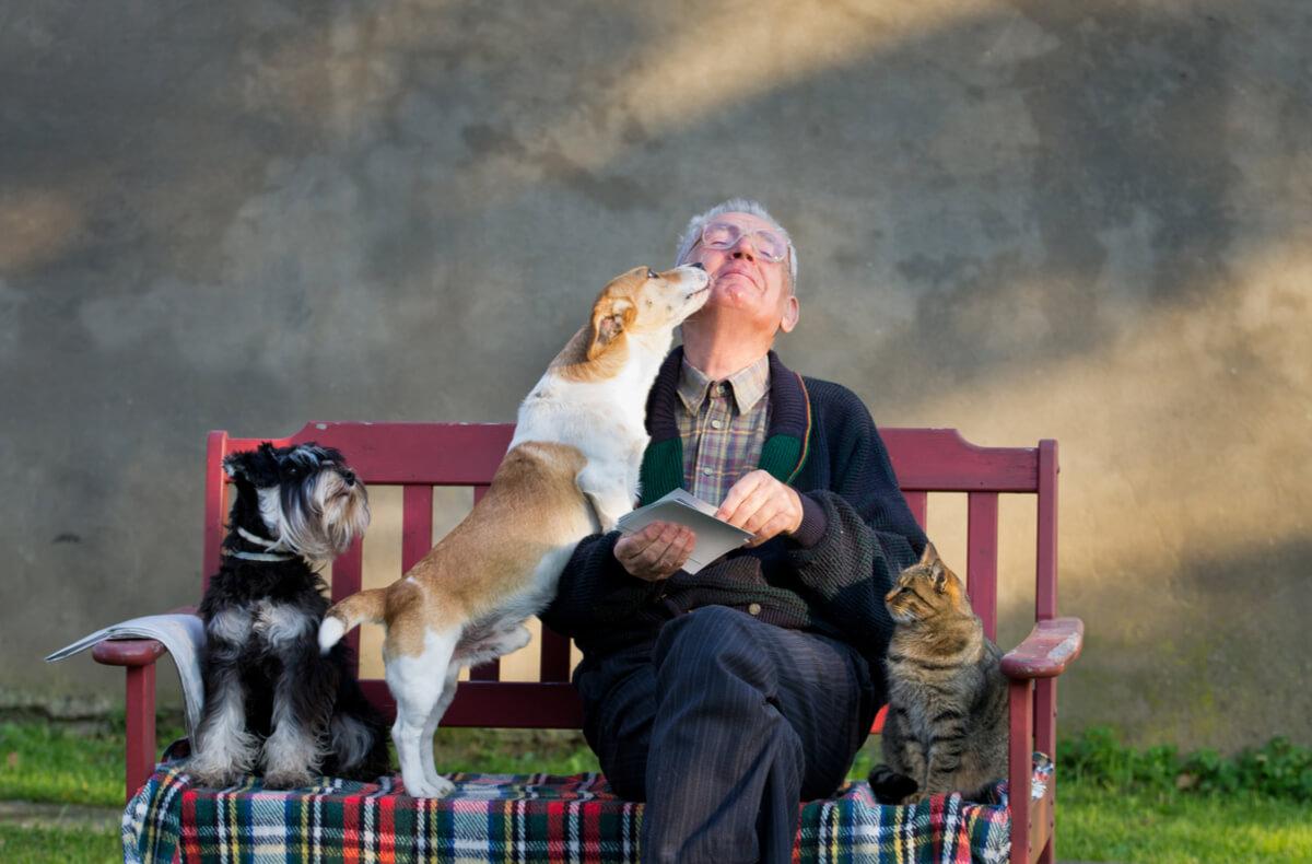 Los efectos de la terapia animal son cuantificables.