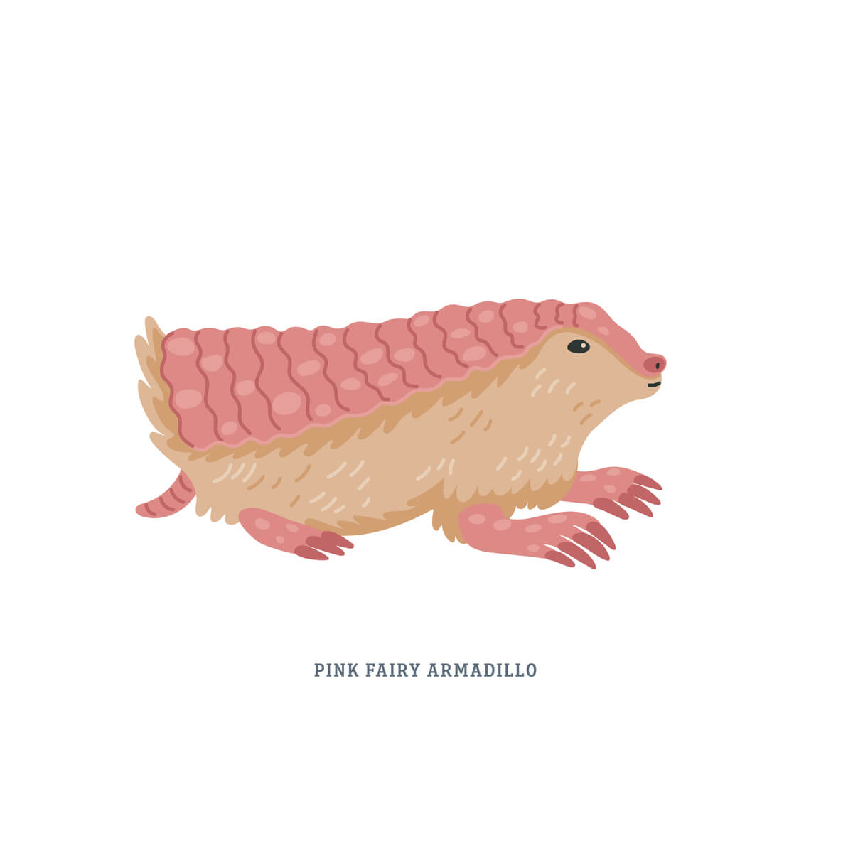 El pichiciego es una de las especies de armadillos.
