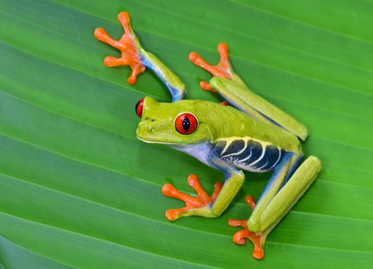 Los 12 animales más hermosos de Costa Rica